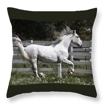 Throw Pillow featuring the photograph Maestoso Aurorra D3990 by Wes and Dotty Weber
