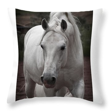 Throw Pillow featuring the photograph Maestoso II Ambrosia D5881 by Wes and Dotty Weber