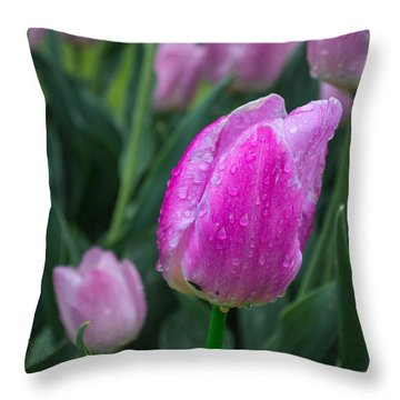 Magenta Tulip In Rain At Brandenburg Throw Pillow
