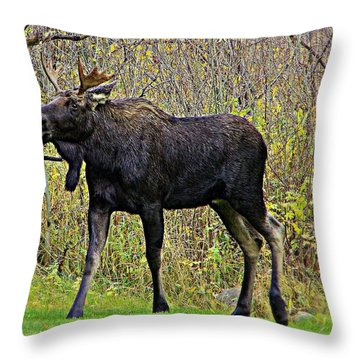 Magical Moose Throw Pillow by Matt Helm