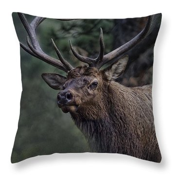 Magnificence Throw Pillow by Anne Rodkin