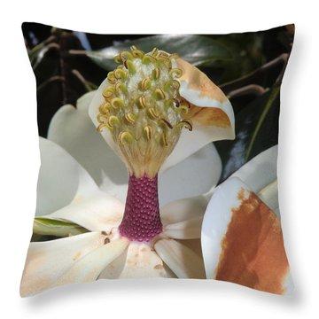 Magnolia Magnicence  Throw Pillow