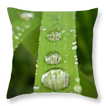 Throw Pillow featuring the photograph Magnifying  by Agnieszka Ledwon