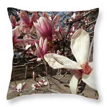 Throw Pillow featuring the photograph Magnolia Branches by Caryl J Bohn
