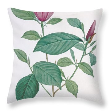 Magnolia Discolor Engraved By Legrand Throw Pillow by Henri Joseph Redoute