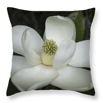 Magnolia Grandiflora Blossom - Simply Beautiful Throw Pillow by MM Anderson