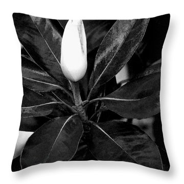 Throw Pillow featuring the photograph Magnolia by James C Thomas