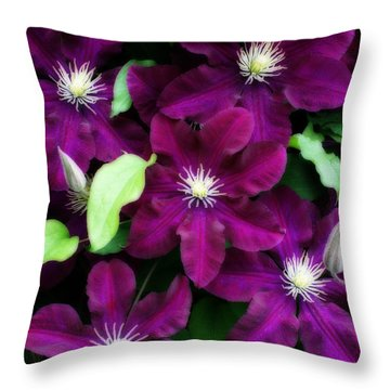 Majestic Amethyst Colored Clematis Throw Pillow