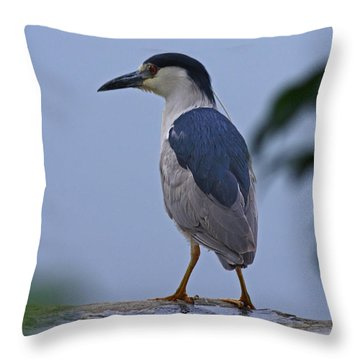 Majestic Black Capped Night Heron At Dusk Throw Pillow by Inspired Nature Photography Fine Art Photography