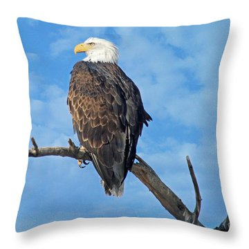Majestic Throw Pillow by Bob Hislop