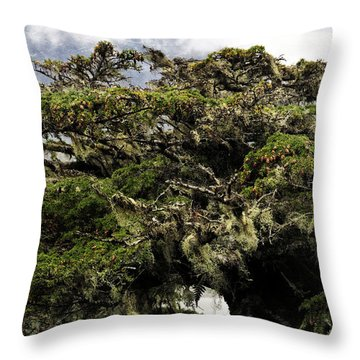 Throw Pillow featuring the photograph Majestic Branches by Davina Washington
