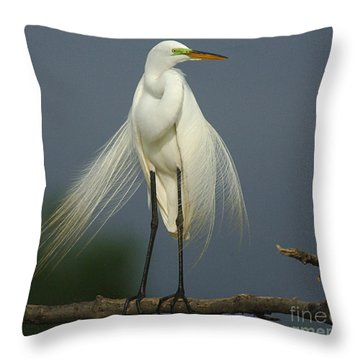 Majestic Great Egret Throw Pillow by Bob Christopher