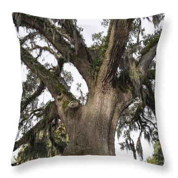 Majestic Live Oak Tree Throw Pillow