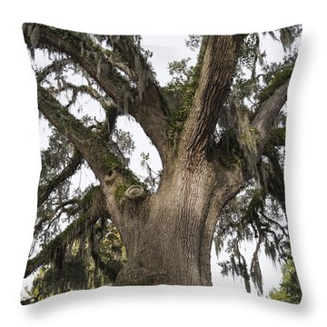 Majestic Live Oak Tree Throw Pillow