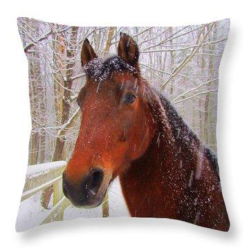 Majestic Morgan Horse Throw Pillow by Elizabeth Dow