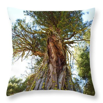 Majestic Sequoia From The Bottom Up Throw Pillow