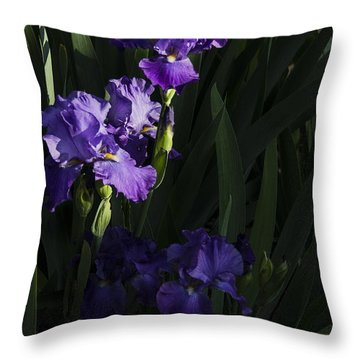Majestic Spotlight Throw Pillow
