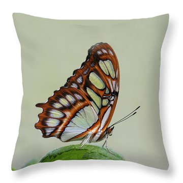 Throw Pillow featuring the photograph Malachite Butterfly #5 by Judy Whitton