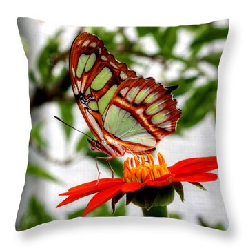 Malachite Butterfly On A Mexican Coneflower Throw Pillow