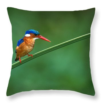 Malachite Kingfisher Tanzania Africa Throw Pillow
