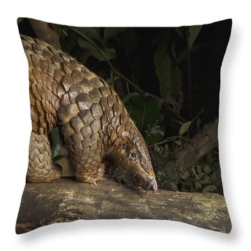 Malayan Pangolin Eating Ants Vietnam Throw Pillow