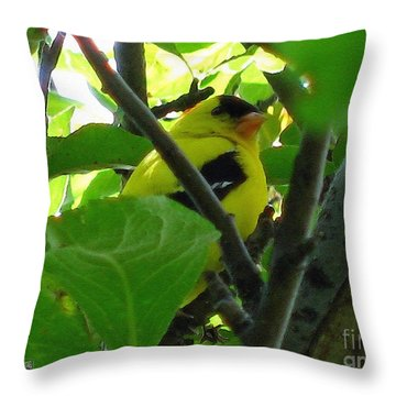 Male American Goldfinch Throw Pillow by J McCombie