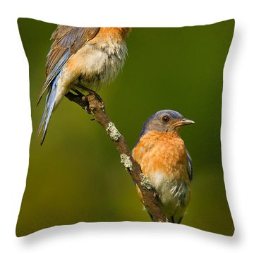 Throw Pillow featuring the photograph Male And Female Bluebirds by Jerry Fornarotto