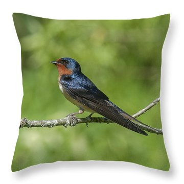 Male Barn Swallow Hirundo Rustica Dsb262 Throw Pillow