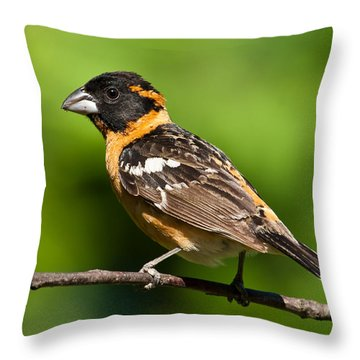 Male Black Headed Grosbeak In A Tree Throw Pillow