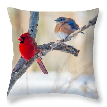 Male Bluebird And Cardinal On Branch Throw Pillow