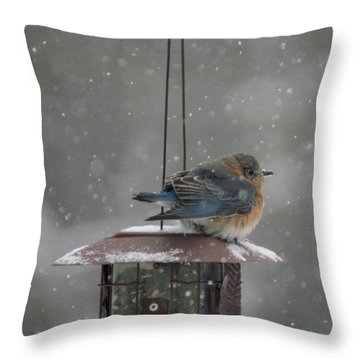 Bluebird In Snow Throw Pillow