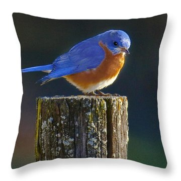Male Bluebird Throw Pillow by Ronald Lutz