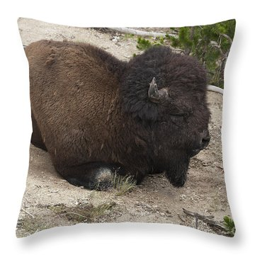 Male Buffalo At Hot Springs Throw Pillow by Belinda Greb