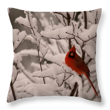 Male Cardinal Amongst Snowy Branches Throw Pillow