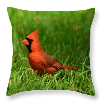 Throw Pillow featuring the photograph Male Cardinal by Bob Sample
