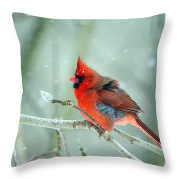 Male Cardinal In A Blizzard Throw Pillow by Constantine Gregory