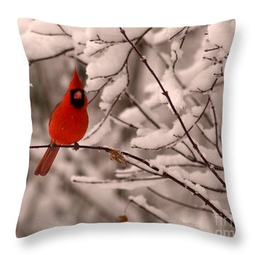 Male Cardinal In Snow Throw Pillow