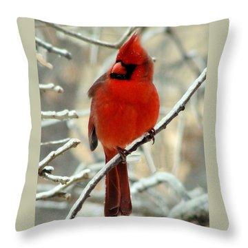 Throw Pillow featuring the photograph Male Cardinal  by Janette Boyd