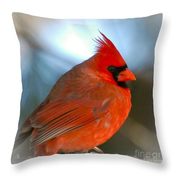 Throw Pillow featuring the photograph Male Cardinal  by Kerri Farley