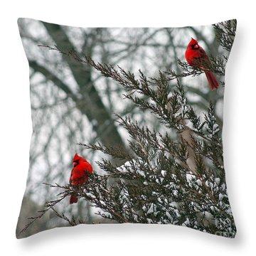 Male Cardinal Pair Throw Pillow