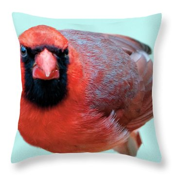 Male Cardinal Portrait Throw Pillow