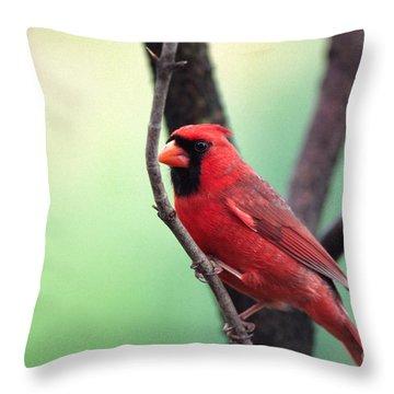 Male Cardinal Throw Pillow by Thomas R Fletcher