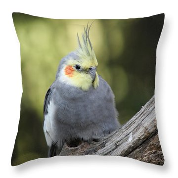 Throw Pillow featuring the photograph Male Cockatiel by Judy Whitton