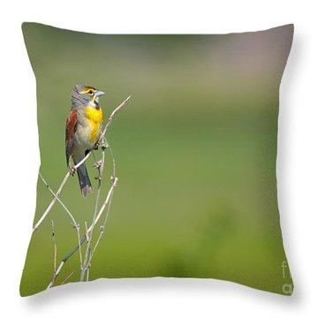 Male Dickcissel Throw Pillow