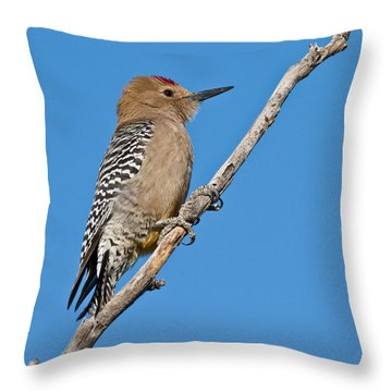 Male Gila Woodpecker Throw Pillow by Jeff Goulden