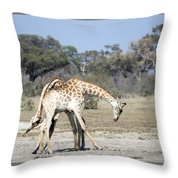 Throw Pillow featuring the photograph Male Giraffes Necking by Liz Leyden