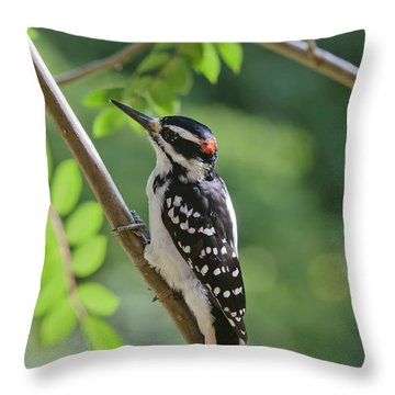Male Hairy Woodpecker Picoides Villosus Throw Pillow by Kenneth Whitten