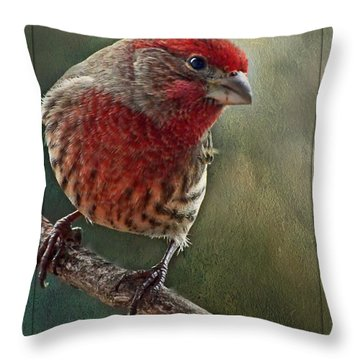 Male Housefinch With Green Texture And Decorations Throw Pillow by Debbie Portwood
