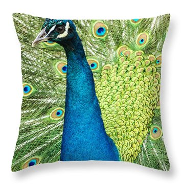 Male Indian Peacock Throw Pillow by Darleen Stry