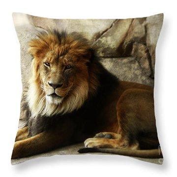 Male Lion At Rest Throw Pillow